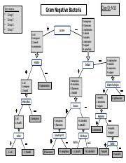 Dichotomous Flow Chart Microbiology Gram Negative Bacteria Flow Chart Docx 1 Rappoli Gram