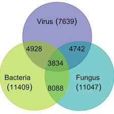 Bacteria And Viruses Venn Diagram Venn Diagram Depicting Similarity Between Responses To Viral