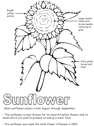 Sunflower with labels
