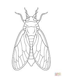 Cicada Super Coloring