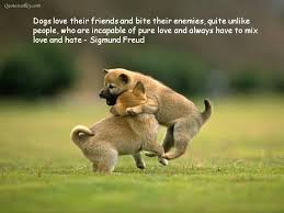 Quotes About Dogs And Friendship Amazing Quotes About Dogs And Friendship 48 QuotesBae