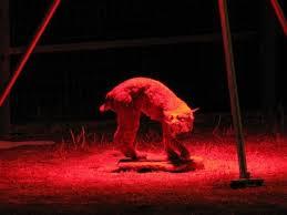 similiar hog hunting lights diy keywords deer feeder hunting light part diy plan 12v remote colorado springs