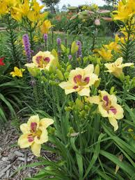 Daylily Designs Garden Tours In Linn And Johnson Counties Offer Free Look At