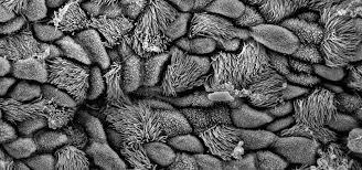 Stanford Microscopy Facility