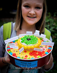 animal cell project candy. Plain Project Project Budgets In Our House Are Usually Around 10 To Animal Cell Candy T