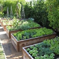 advice for raised bed vegetable growers