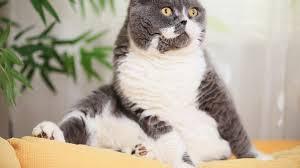 non prescription low phosphorus cat food. Non Prescription Low Phosphorus Cat Food T