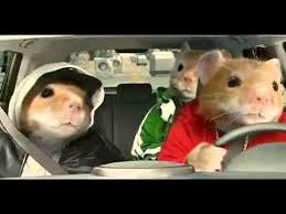 kia soul hamster gif. Contemporary Soul 2012 Kia Soul Hamster Commercial Black Sheep Hamsters Video Mp4 With Gif