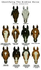 Horse Breed Descriptions
