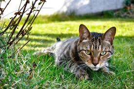 how to keep cats out of the garden. Several Measures Are Available To Tackle Cats In The Garden How Keep Out Of