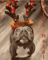 Feliz Natal Dezembro GIF - FelizNatal Dezembro 25DeDezembro - Discover &  Share GIFs