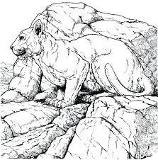 coloring pages to print mountain lion