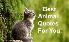 All Time Best 2019 Animal Quotes The Quote Garden