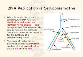 cell molecular biology dna replication