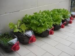 Google Garden Design Mesmerizing Amazing Bottle Garden Ideas Reuse Plastic Bottles YouTube