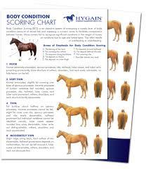 Free Fact Sheet Equine Body Condition Scoring Chart