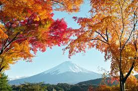 Autumn In Japan Hd Wallpaper Hintergrund 3100x2047 Id