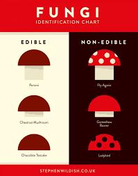 Fungi Identification Chart Visual Ly