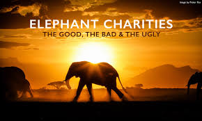 Love Life And Elephants Quotes With Elephant Charities The Good Bad