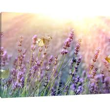 wall arts lavender wall art lily manor erfly on flowers canvas