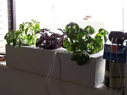 build your own hydroponic window herb garden system hydroponic herb garden window herb garden hydroponic herb hydroponic herb garden