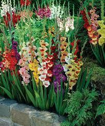 Pin by Lila Hamm on Flowers | Bulbs garden design, Garden bulbs ...