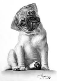 Small Picture realistic drawing puppy Google Search Birds and botanicals