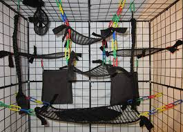 toys for sugar gliders