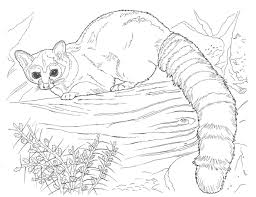 realistic animal for girls realistic animal coloring pages
