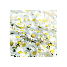daisy wall art items similar to daisy wall art photography nature flower photography fine photography art daisy wall art