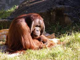 Image result for auckland zoo