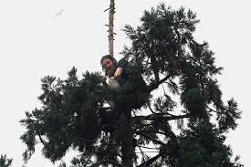 mother of infamous man in tree wants focus on mental illness wjla a man sits in an 80 foot tall tree in downtown seattle tuesday