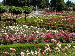 portland international rose garden