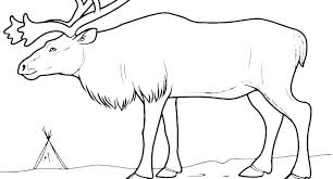 Arctic Coloring Pages Wolf Coloring Page Wolf Coloring Pages For