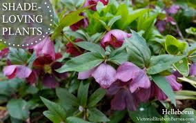 The 25 Best Climbing Shade Plants Ideas On PinterestClimbing Plants That Like Shade