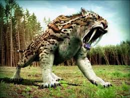 Tiger vs wolf updated their profile picture. Dire Wolf Vs Saber Tooth Tiger Video Dailymotion