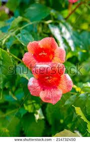 beautiful decorative flowerses