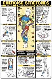 17 Bodybuilding Chest Exercises Chart Hd Exercise Chart Hd