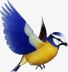 colorful birds flying clipart. Perfect Flying Colorful Birds Fly Wing Blue Sky PNG Image And Clipart For Colorful Birds Flying D