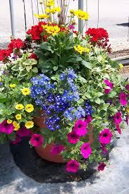 Good Gulleyu0027s Custom Container Gardens | Container Plants | Container Gardening,  Container Plants, Container Flowers