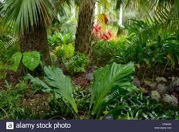 usa florida indian river county vero beach mckee botanical garden