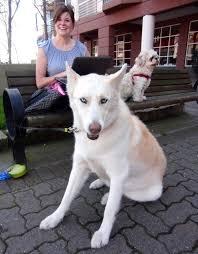 german shepherd husky mix full grown. Plain German White German Shepherd Husky Mix For Full Grown H