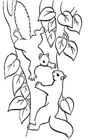 Coloriage Dans La Foret Ecureuils Colorier Allofamille