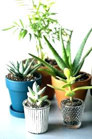 Best office plants no sunlight Thelaunchlab Office Plants No Sunlight Good Sellmytees Office Plants No Sunlight Plants For Your Office That Grow With