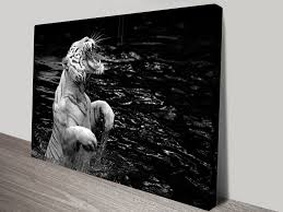 white tiger black and white canvas art