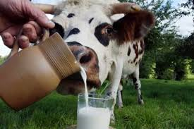 Скисає Молоко Реферат Скачать Чому Скисає Молоко Реферат Скачать
