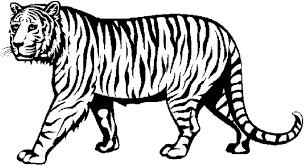 Kleurplaten Tijgers Leeuwen