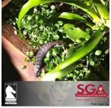 Small Picture Garden Design Garden Design with Sustainable Gardening Australia