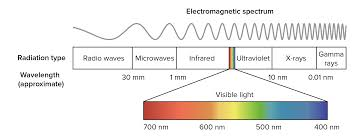 Color And Light Absorption Wavelengths Of Light And Photosynthetic Pigments Article