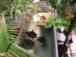 diy patio pond:  images about water turtles habitat on pinterest homemade turtles backyard ponds and turtle enclosure